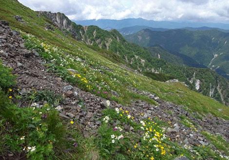 花の山.jpg