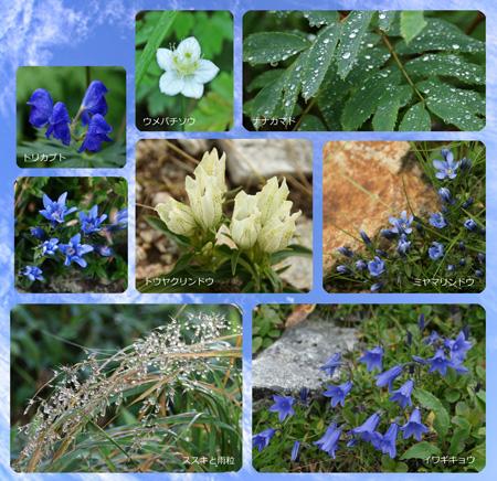 秋の花450.jpg